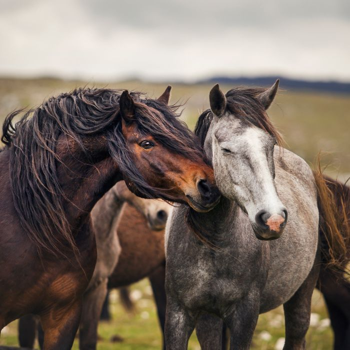 Photographing Wild Horses Has Left Me In Peace