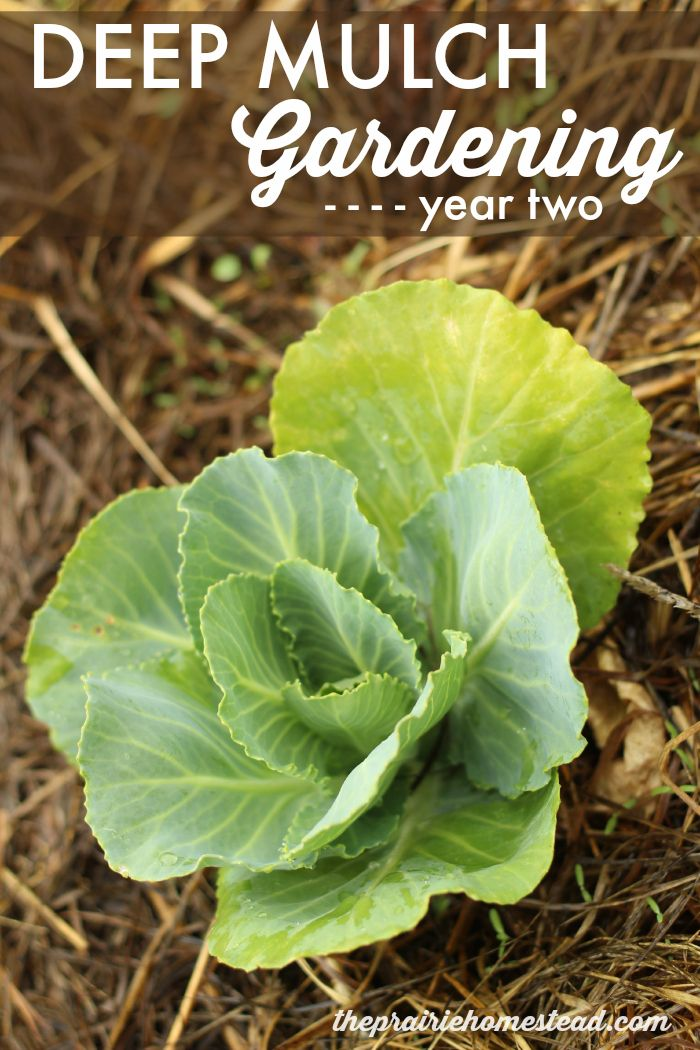 Deep Mulch Gardening , 79 Best Organic Gardening Images On Pinterest