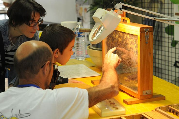 Les apiculteurs au Village des sciences de Bourg ! Samedi 12 oct. (13h30-18h) et dimanche 13 oct. (14h-18h) au Technopole Alimentec
