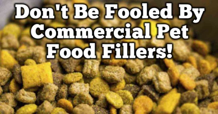 9 best dog poop facts images on pinterest pet health for Does fish oil make you smell