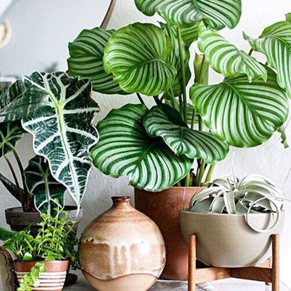 Patterned Plants Large Leaf Plants Plant Decor Indoor Plants
