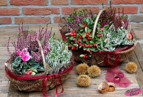 """<p class=""""hellgruen""""><b>Es ist noch lange nicht Schluss mit der Blütenpracht auf Balkon und Terrasse.</b></p> Nach den ersten Nachtfrösten müssen die Sommerblumen jetzt zwar raus, aber mit winterharten Herbstblühern oder Ziergehölzen können Sie eine dauerhaft dekorative Bepflanzung schaffen. Besonders gut geeignet sind <b>Knospenblüher</b> (Calluna vulgaris). Denn diese farbenprächtigen Heideschönheiten, versprechen aufgrund ih..."""