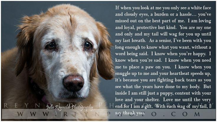 Dog - Golden Retriever - Senior Dog - Poem - Photography. We miss you Duke..