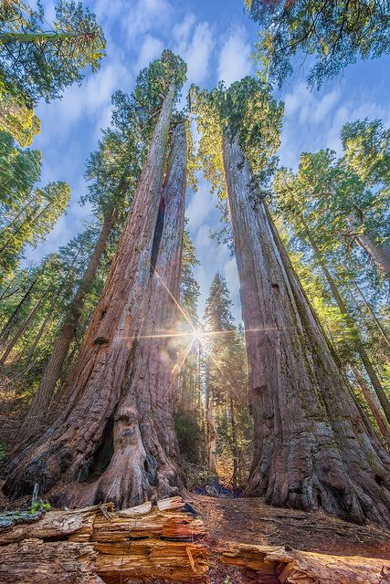 Calaveras Big Trees State Park, four miles northeast of Arnold, has 6,750 acres with campgrounds. The park is a popular place for hiking, fishing, swimming and, in the winter, cross-country skiing. The park's scenic overlook provides a great spot for stargazing. For more information about the park, call (209) 795-2334.