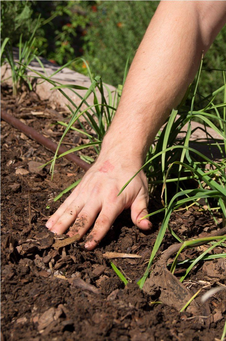 17 Best Ideas About Organic Matter On Pinterest Compost Bags Garden Compost And Compost