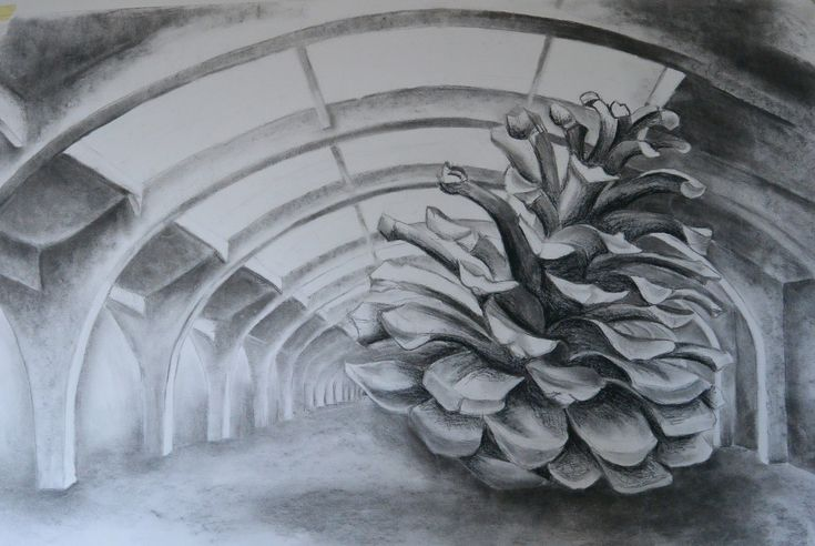 pine apple, charcoal on paper