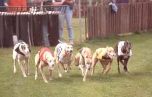 "The last of Kansas's racetracks closed in 2008 and now billionaire Phil Ruffin wants to reopen them all as ""racinos,"" or casinos where people can bet on dog races. Dog racing is cruel and inhumane and must be stopped. Tell Kansas's governor to not let these casinos host greyhound races and to ban dog racing once and for all.  Greyhounds_by_Jan Eduard_German Language Wiki"