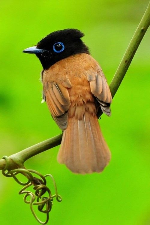 Beautiful Birds In the World (10 Photos) | See More Pictures