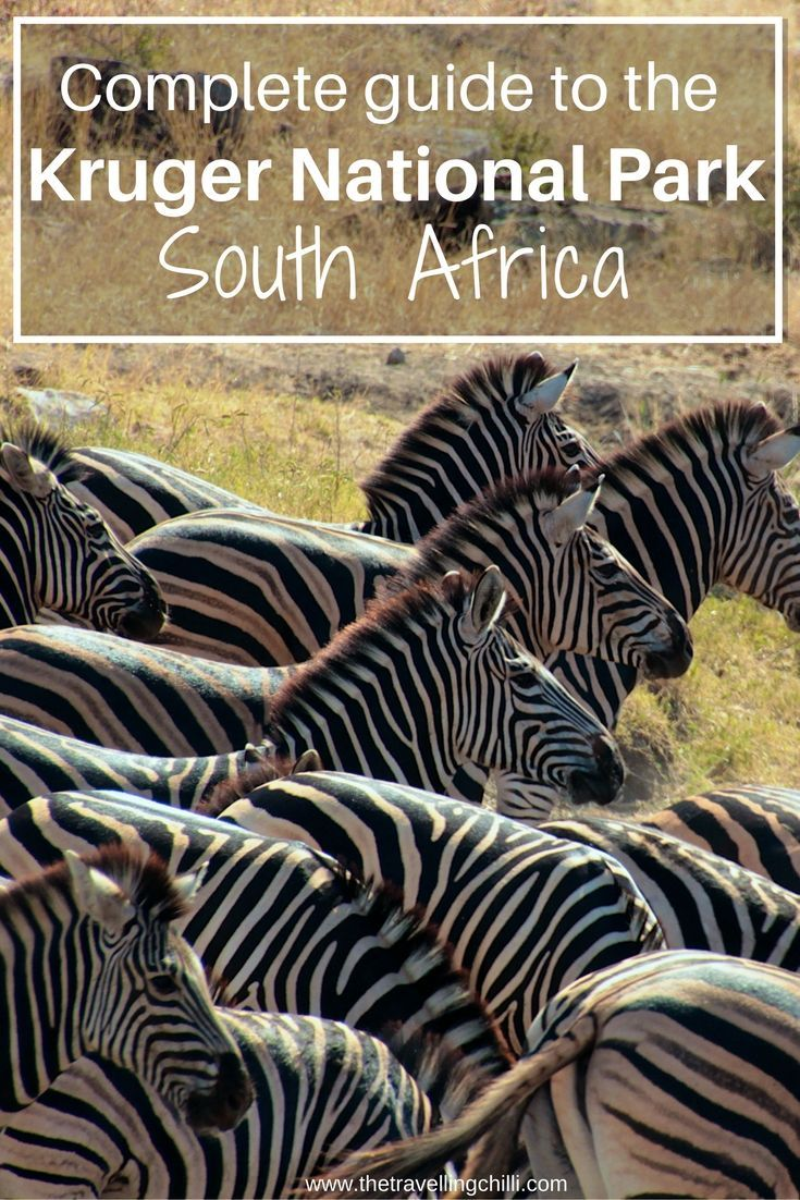 a guidebook to kruger national park in south africa Top 12 places to visit in south africa - top 12 south africa travel guide (includes cape town, kruger national park, johannesburg, durban, robben island, & more) kindle edition.