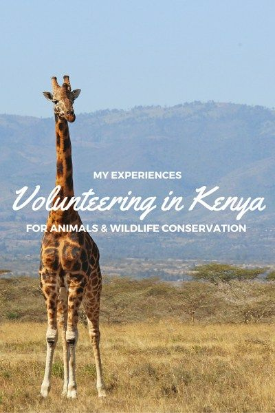 My Experiences Volunteering in Kenya for Animals and Wildlife Conservation