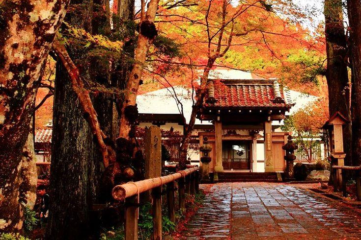 上質なお宿で癒されて紅葉もアートも楽しめる秋におすすめ箱根旅