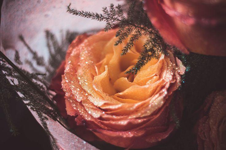 #flower #rose #waterdrops #purple #yellow