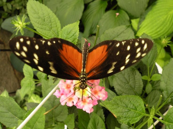 Butterfly World, Moncton, New Brunswick, Canada