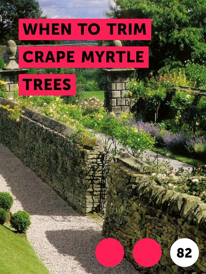 When To Trim Crape Myrtle Trees Myrtle Tree Plants Magnolia Trees