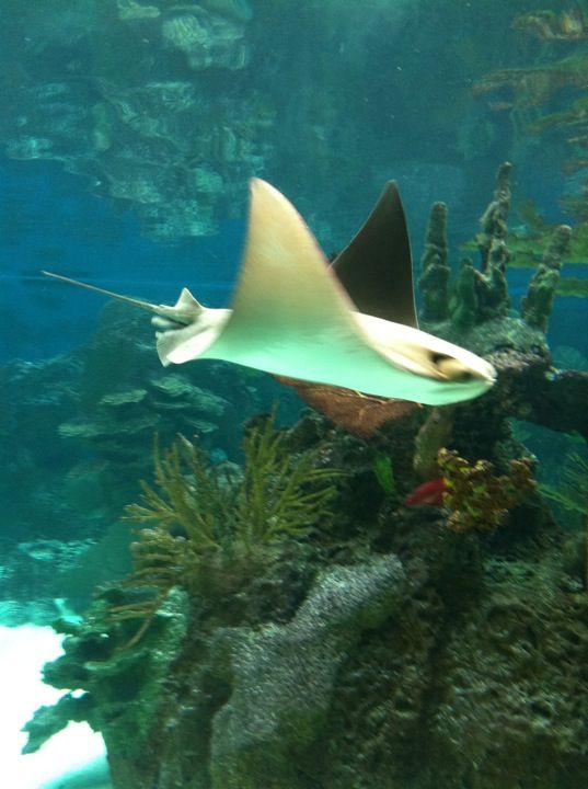 52 Best Images About Zoos Aquariums On Pinterest New