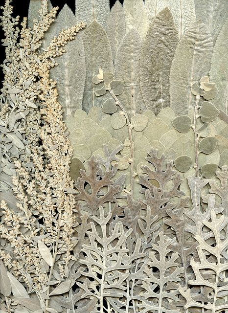 pressed leaves & flowers, all silvers & whites