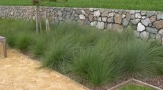 coastal garden native grasses - Google Search