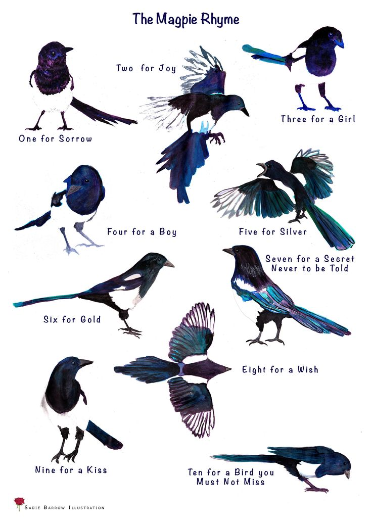 Magpie Rhyme A3 Print by SadieBIllustration on Etsy