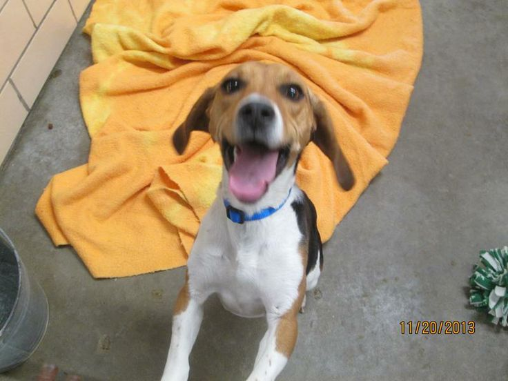 Some people were keeping Poochie tied to a run-down dog box at the edge of their property - she escaped in hopes of finding a loving home, not a lawn ornament.  Poochie loves kids!!The pound does not have email.If you are interested in adopting this...