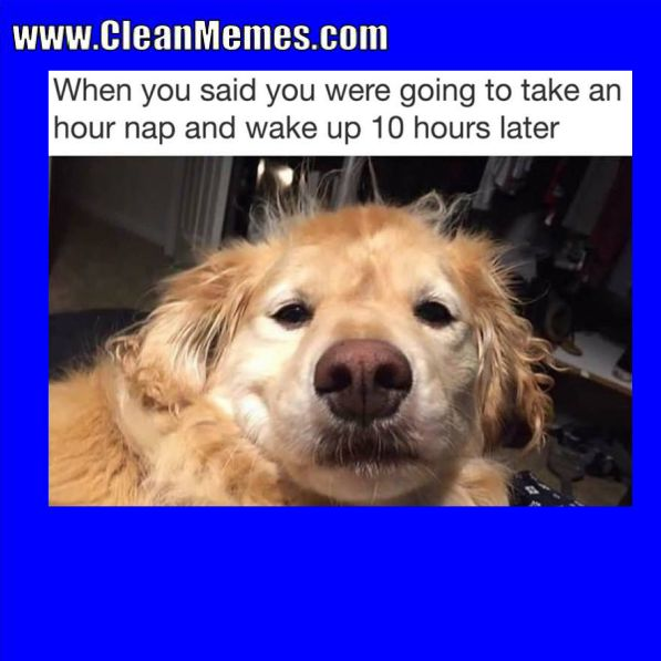 Best Funny Dog Pictures