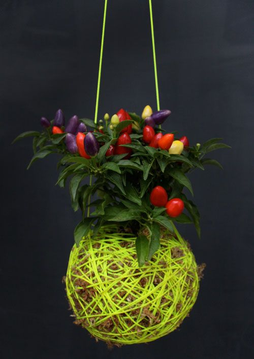 Mister Moss - coming soon to The Assembly HallPlants Hangers, Gardens Ideas, Ball Hanging, Mister Moss, Hanging Plants, Moss Ball, Cool Ideas, Chilis Peppers, Gardens Design