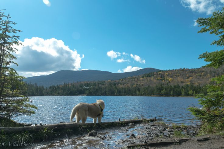 https://flic.kr/p/pB1c2N | One with the lake | Lonesome Lake, NH