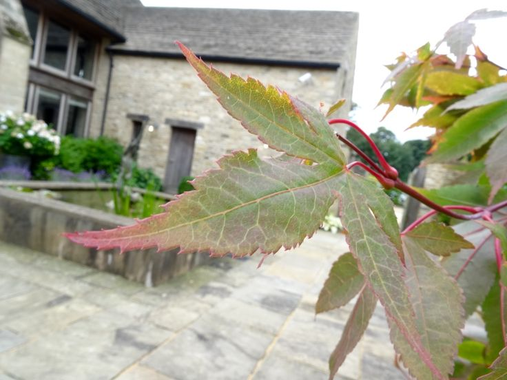 Changing of the seasons at Calcot, tinges of autumn on the leaves http://www.calcot.co