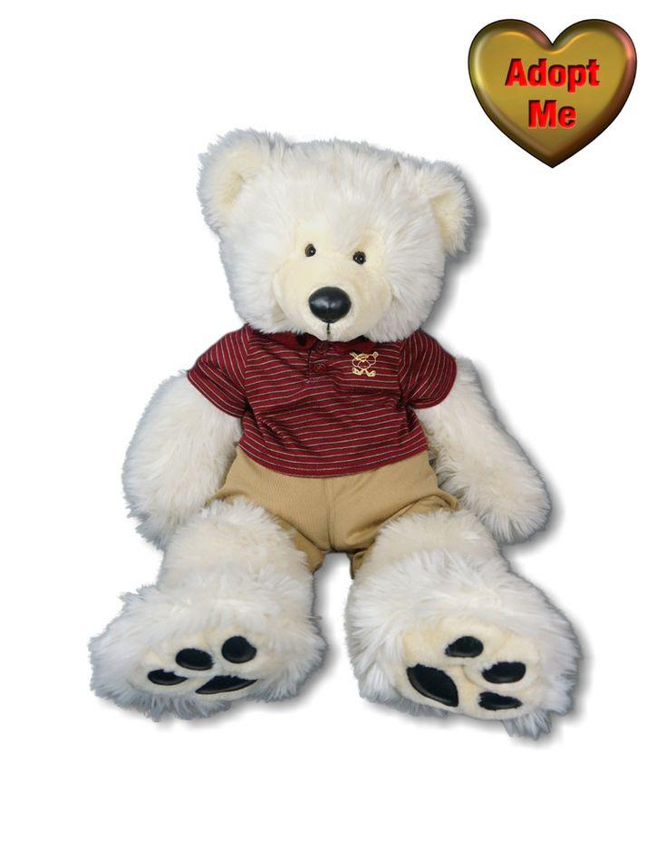 Teddy bear puppies rescue wisconsin