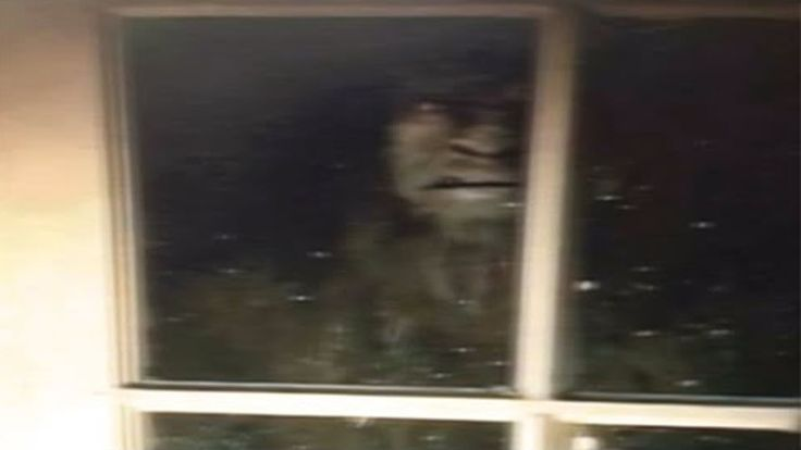 Brothers Terrified By Bigfoot Outside Bedroom Window | The Fortean Slip