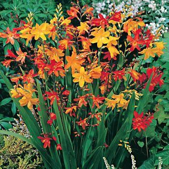 Fall perennials zone 7 euffslemani 46 best zone 5 gargen images on pinterest beautiful flowers mightylinksfo