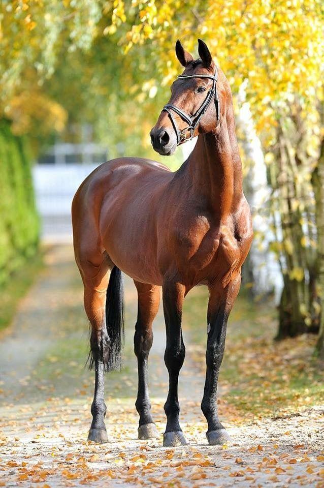 Musclé, pétillant et heureux , tout les autres chevaux devrait être pareils.
