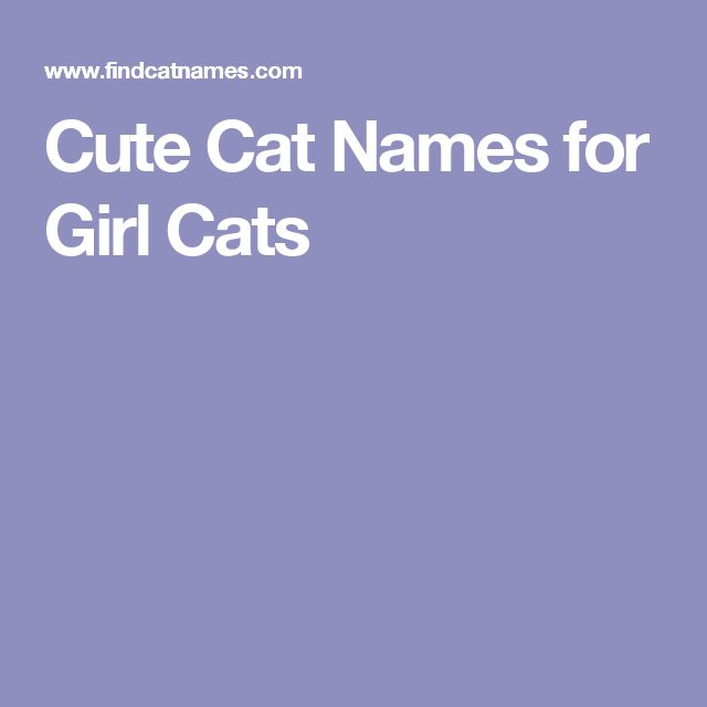 Cute Cat Names for Girl Cats