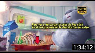 la vida secreta de tus mascotas pelicula completa en español - YouTube