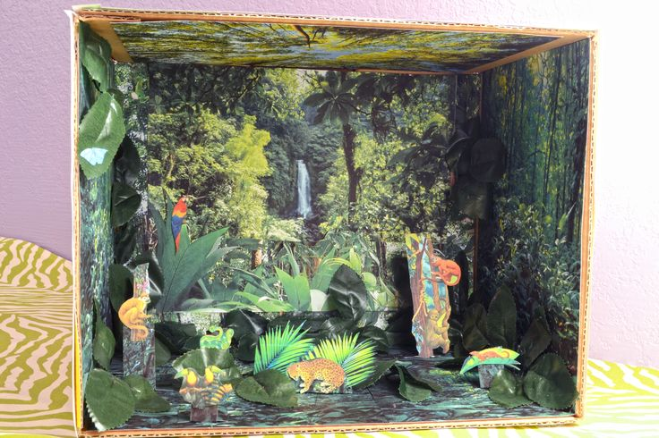 All information about Forest Ecosystem Diorama - #catfactsblog