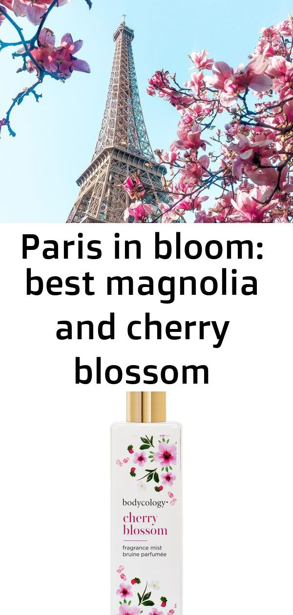 Paris In Bloom Best Magnolia And Cherry Blossom Locations 14 Cherry Blossom Fragrance Magnolia Cherry Blossom