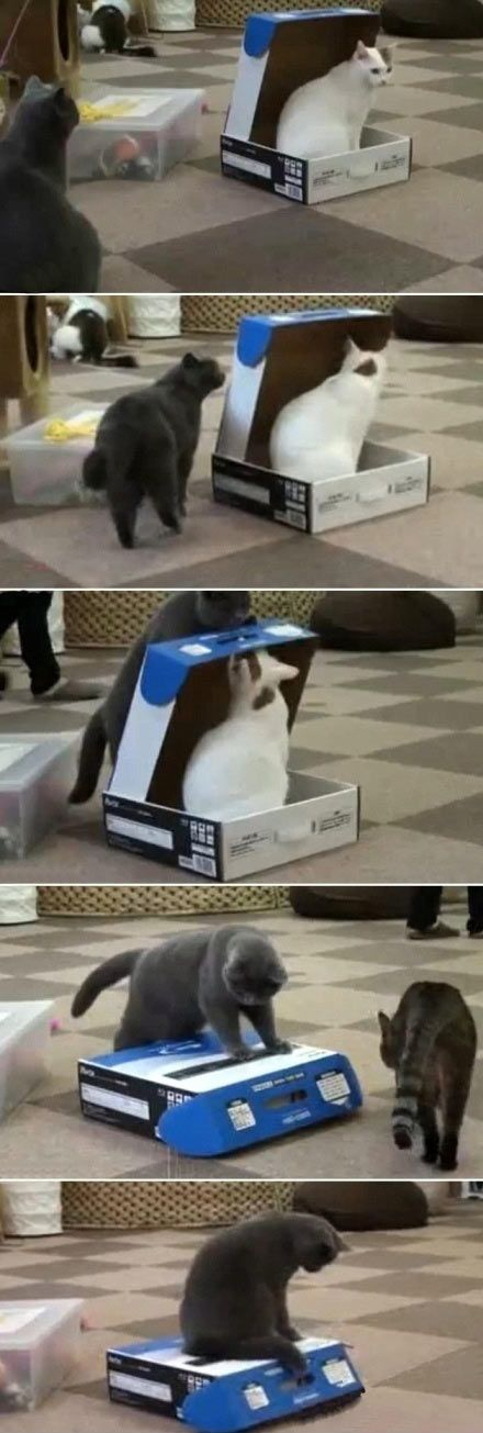 Cats are jerks…#funny #lol #lolzonline
