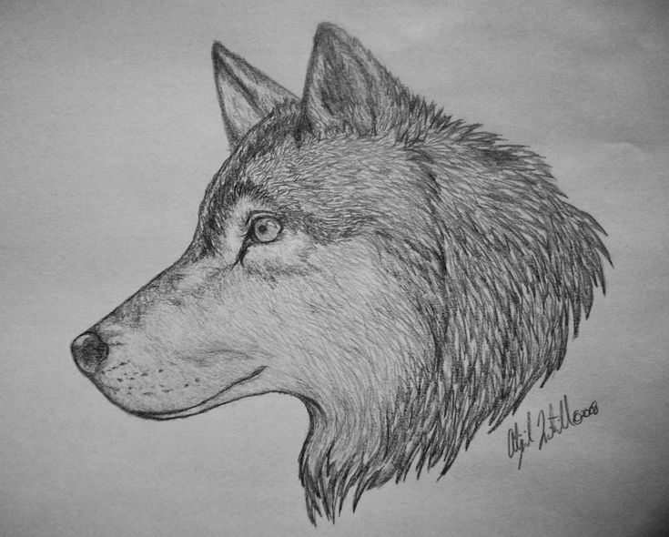 Awesome Wolf Drawings Related Keywords & Suggestions
