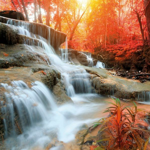 Autumn Waterfall Wallpaper Wall Murals, Waterfall with a backdrop of Autumn coloured trees  Autumn Waterfall Wallpaper is a stunning feature wallpaper, Trees in the background are featured in gorgeous orange tones with sunshine flooding through the leaves. In the foreground there is a beautiful waterfall.This would add a fabulous feature wall to living area.