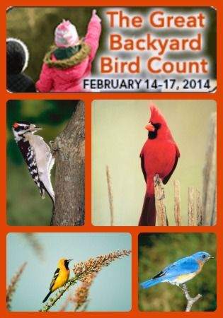 Bird Watching Books for Homeschool Nature Study