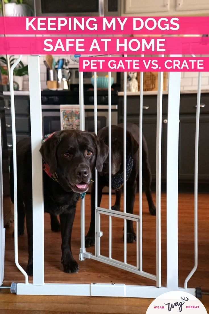 Keeping My Dogs Safe At Home Pet Gate Vs Crate Wear Wag Repeat In 2021 Dog Safe Pet Gate Dog Wellness