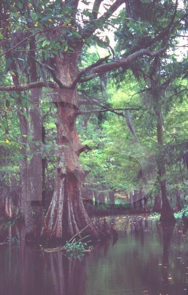S Louisiana swamps
