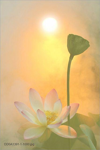 Flower | Flickr - Photo Sharing!