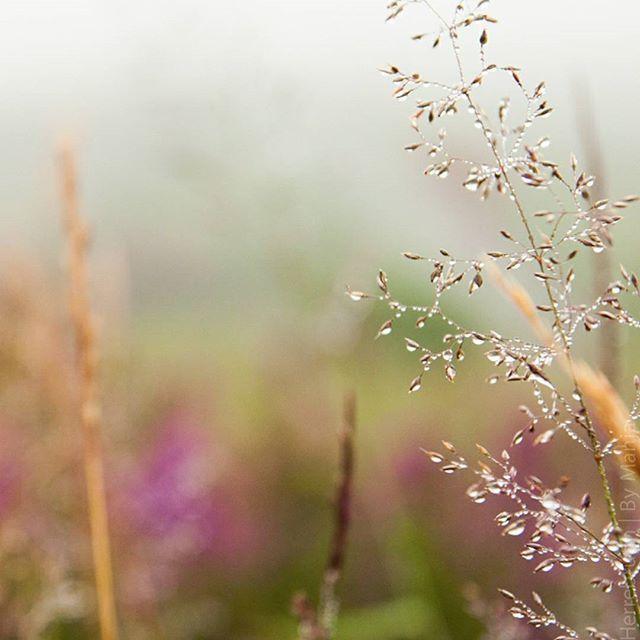 I love drops on grass on my hikingday!  #wonderfulireland #ireland🍀 #closeupshot #drops #exploremore #outdoor #outdoormentality #beautifulplaces #wanderlust #hikingday #outdoorblogger #naturelover #nature🍃 #flower🌸 #activetravel #naturelover @by_manja