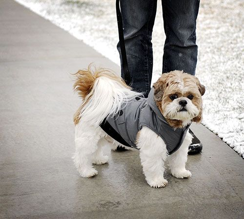 Review Canada Fouse Coat by FouFou Dog Dogs, Dog milk