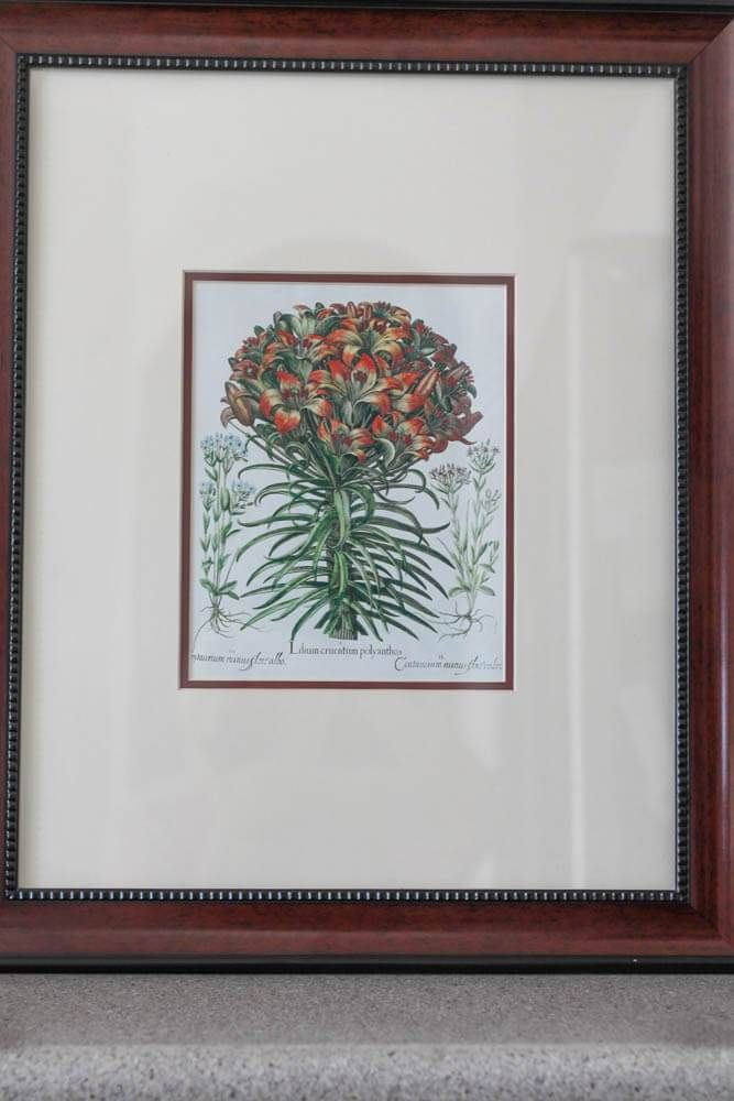 Fearless Art for your Home. Use Art Books - like this technical drawing of a flower - to frame and hang on your wall