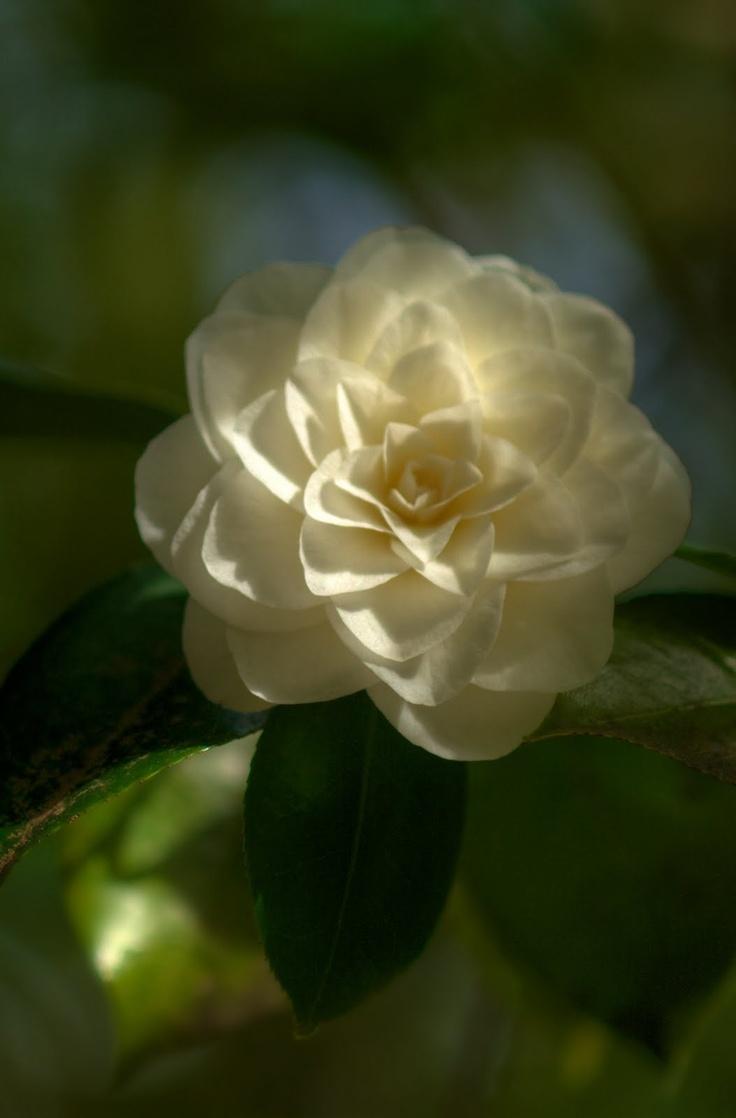 an asian flower at the Portland Japanese Garden