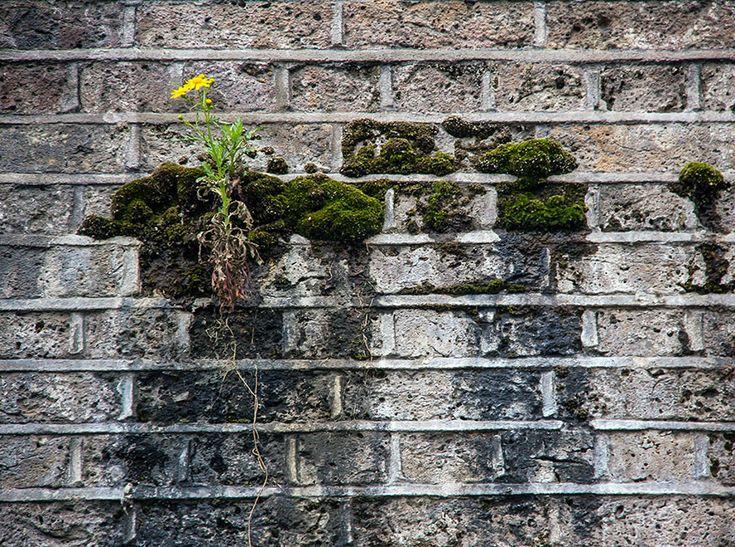 25 plantas que não desistiram e lutaram para viver | Catraca Livre