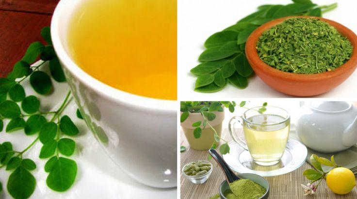 Chá de moringa benefícios, propriedades, receita