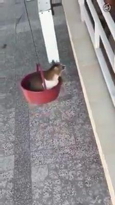 Cat's Cool Life 😎