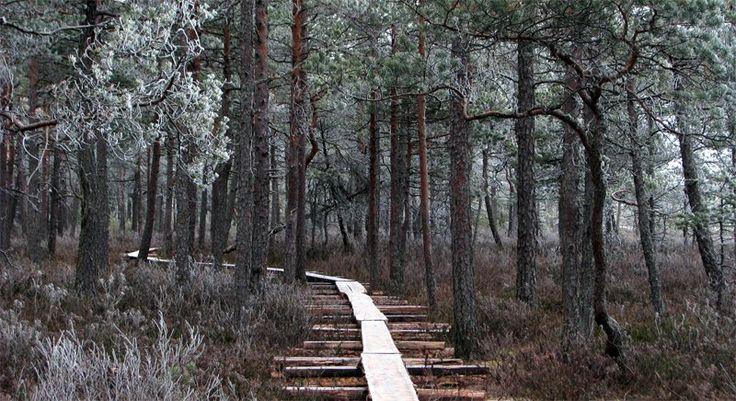 'Swamp emptiness I' by Suensyan.deviantart.com on @deviantART